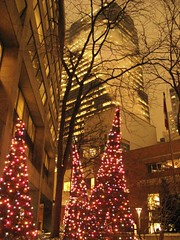 Christmas trees in the Toronto