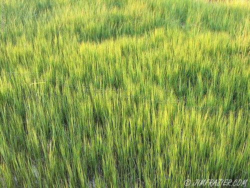 park travel summer plant abstract green nature water beautiful beauty grass river flora pattern quiet natural southcarolina july peaceful calm fromabove business charleston serenity grasses serene marsh lookingdown minimalism minimalist grasslands wetland citypark 2007 colorfield riparian ashleyriver repeating q2 v500 v1000 brittlebankpark jimubs ©jimfraziercom wmembed