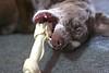 Bone Play