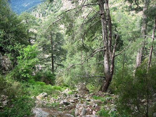Le sentier Firuletu - Casa Infurcata dans le ravin de Calanconi vers Ota