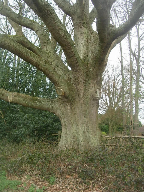 Startled tree