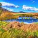 Swamp landscape by Tambako the Jaguar