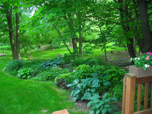 Landscaping Under The Trees : Shade garden with giant hostas under trees