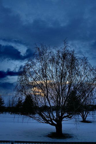 travel viaje winter sunset tree night suomi finland landscape geotagged arbol rovaniemi lappland paisaje invierno puestadesol 100club finlandia laponia 50club luciojosémartínezgonzález luciojosemartinezgonzalez geo:lat=664985 geo:lon=257438333333333
