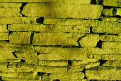 wall 2 (sunny)