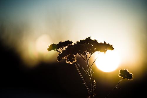sunset nature closeup bokeh style gear places things fredericton newbrunswick 50mmf18 timeofday d80 abigfave cshot