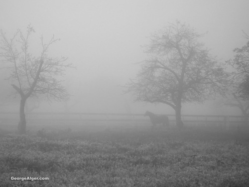 Horse In The Fog, by George Alger