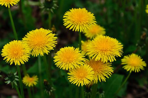ca canada nature novascotia mtuniacke gardensorflowers