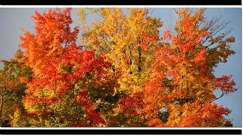 autumn ny tree fall foliage upstatenewyork adirondack lakeplacid newenglandtripsep07