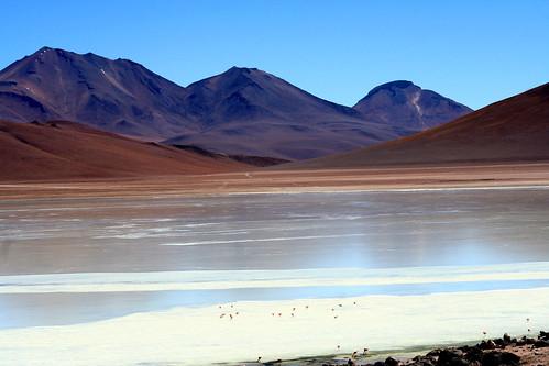 bolivia paisaje flamencos transamericana