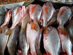 cod(0.0), tilefish(0.0), milkfish(0.0), tilapia(1.0), animal(1.0), fish(1.0), fish(1.0), seafood(1.0), common rudd(1.0), red snapper(1.0), food(1.0), red seabream(1.0), snapper(1.0), tilapia(1.0),