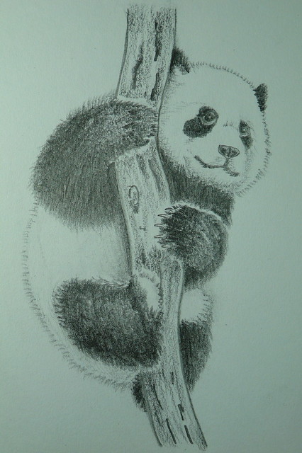 2119494199 f4c6d44516 z jpgPanda Drawing In Pencil