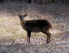 little deer thing.jpg