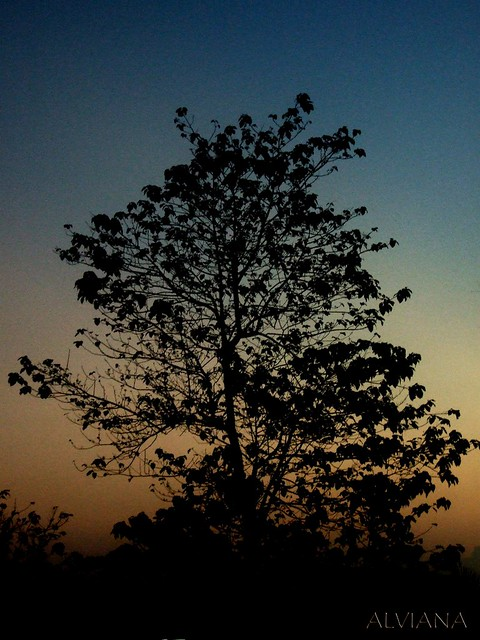 Tree Silhouette at Dawn