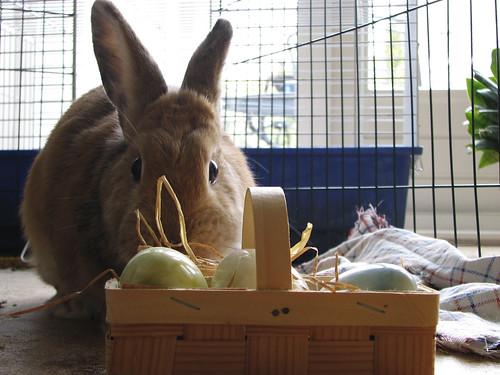 Easter brunch in Vegas - Easter Bunny and Basket