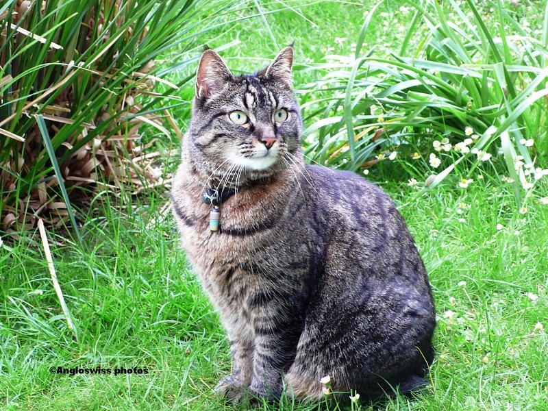 Tabby in the garden
