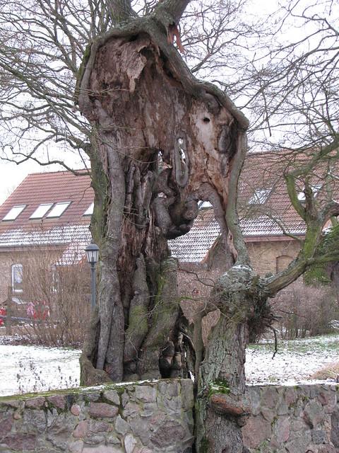 Loch im Baum