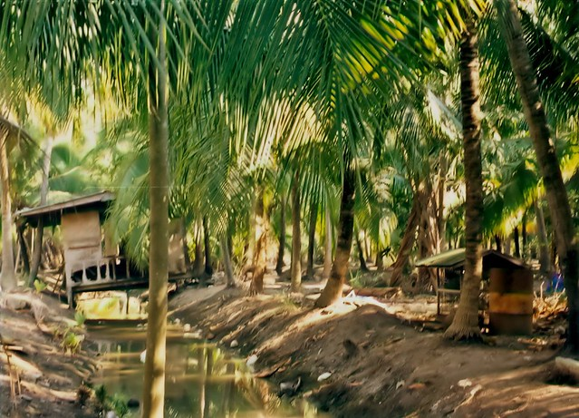 how to start a coconut plantation
