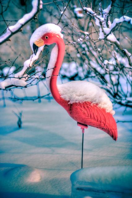 Snowbird - 4/365