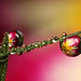 Dewdrop refraction #4 by Lord V