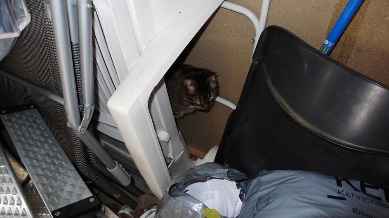 Tabby in the garden cupboard