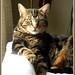 My recent cat Sereno