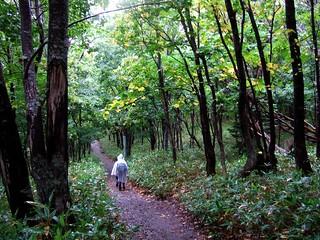 フレペの滝遊步道