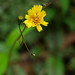 yellow flower - gunpowder maryland