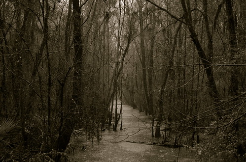 wallpaper bw sc rain river nikon path goosecreek d40 anawesomeshot aplusphoto medwayplantation
