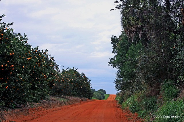 The Orange Road