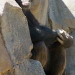 Los Angeles Zoo 061