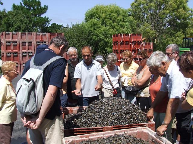 Visite sas baudet entreprise mytilicole la plaine sur m flickr photo sharing - La plaine sur mer office de tourisme ...