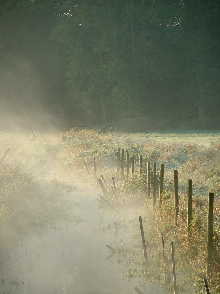 Matin brumeux, gelée blanche / Misty frosty morning