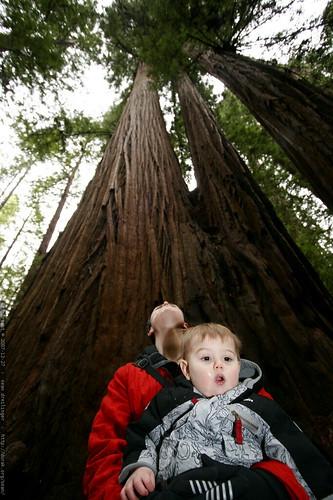 rachel & sequoia under the heritage grove redwood trees    MG 7956