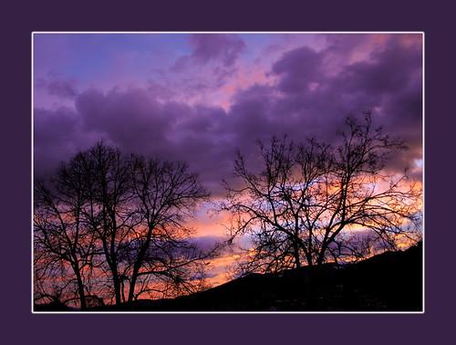 morning trees sun silhouette sunrise bravo sonnenaufgang magicdonkey flickrsbest mywinners anawesomeshot diamondclassphotographer flickrelite reginaaustria thegoldenmermaid theperfectphotographer