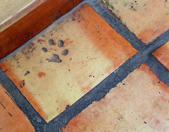 Saltillo Tile Paw Flickr Photo Sharing