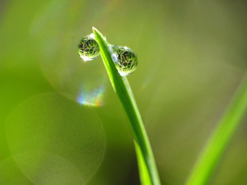 Waterdrops on grass