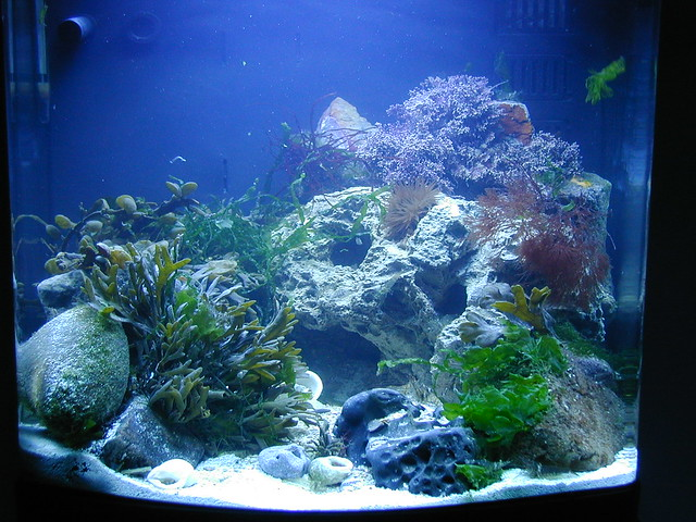 Marine nano aquarium three flickr photo sharing for Aquarium nano marin
