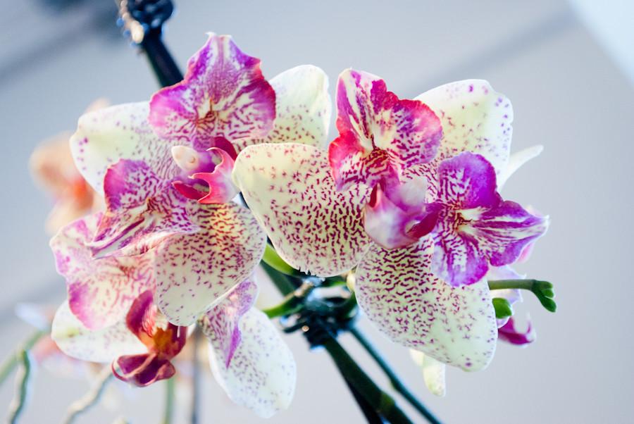 Very distinctive. орхидеи разнообразны!