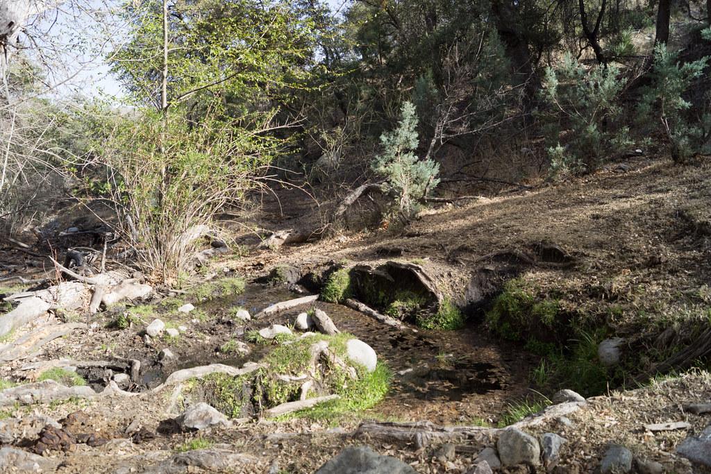 1403 Araster Spring