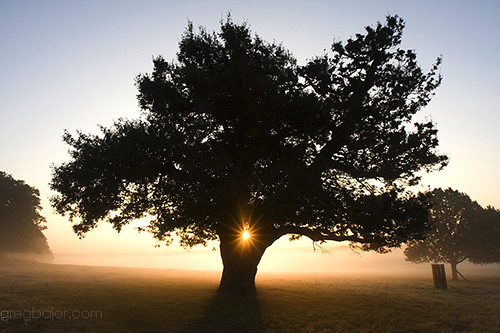 park morning mist tree london misty fog sunrise early richmond holidaysvacanzeurlaub diamondclassphotographer gregbajor