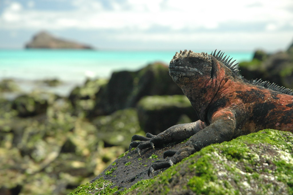 Galapagos - Española