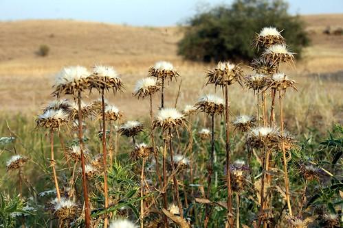 flowers flower color nature landscape day iran ایران جاده گل طبیعت khuzestan خوزستان روز انوش anoosh خار behbahan رنگی بهبهان doctorhendii