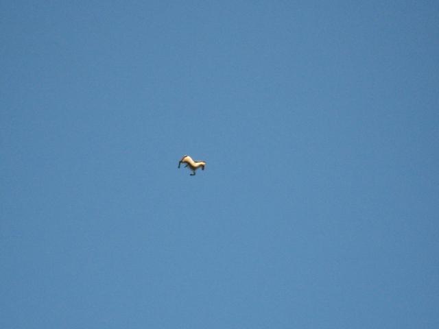 Horsefly Oxford Circular.