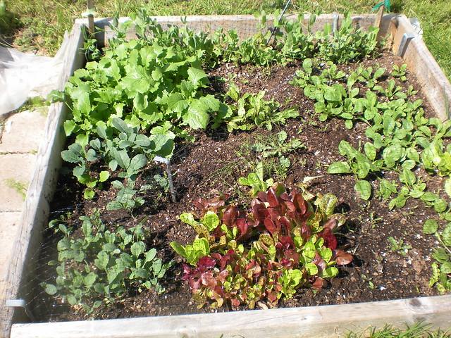 Square Foot Gardening Flickr Photo Sharing