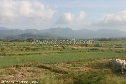 Farm Fields in Ilocos Norte, the Philippines