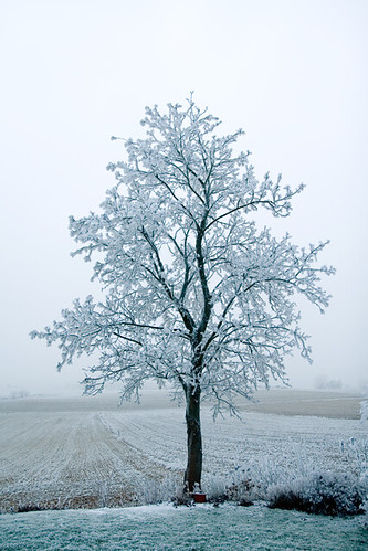 morning blue winter white snow cold tree ice nature beautiful canon landscape bayern eos scenery heart branches magic fabulous baum 30d 10faves 100comments superhearts theunforgettablepictures photofaceoffwinner platinumheartaward unlimitedphotos