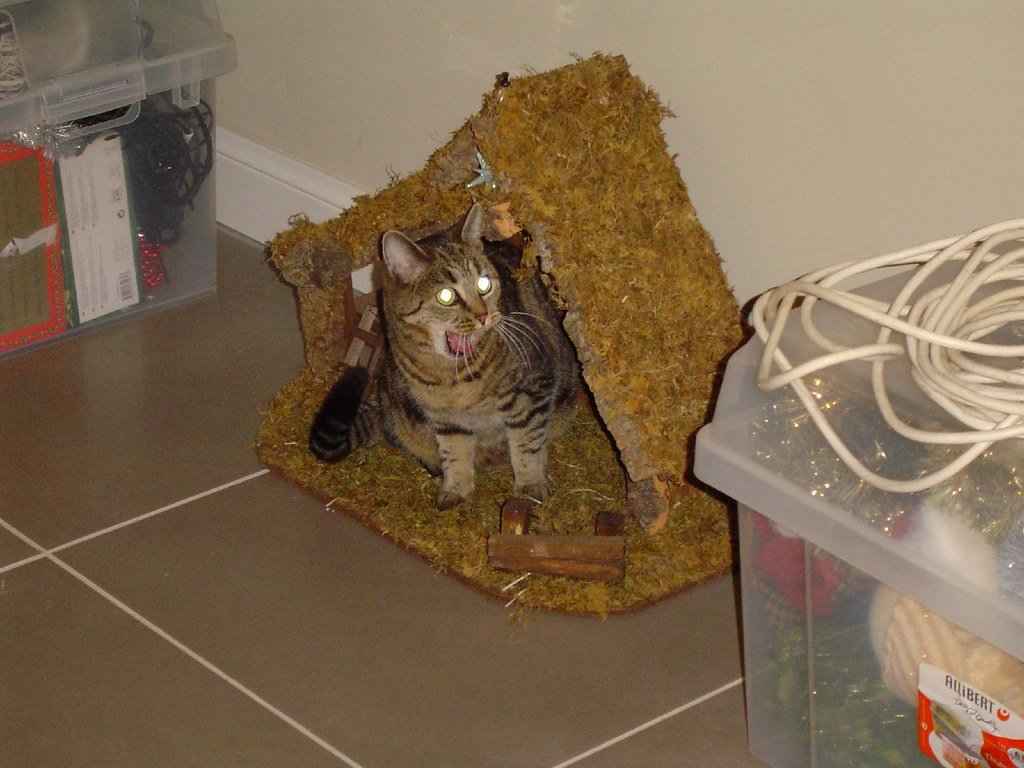 I'm sure there was a cat in the nativity scene
