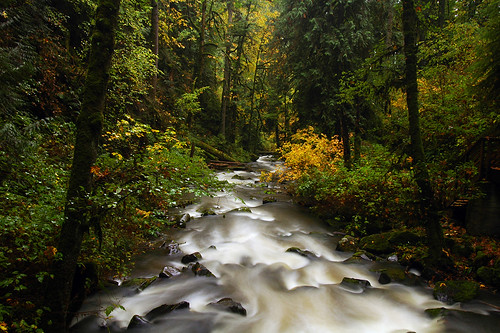 autumn water oregon fallcolors autumncolors pacificnorthwest creeks cubism linncounty fineartphotos goldenmix mcdowellcreek longexposurewater worldwidelandscapes natureselegantshots mcdowellcreekcountypark