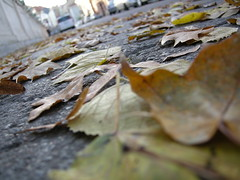 Leaves on the ground 2